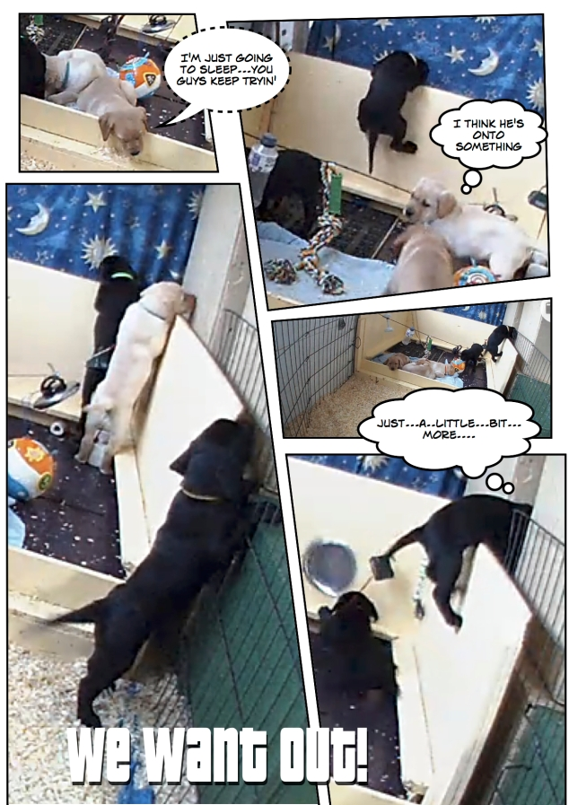 Puppyescape_page3