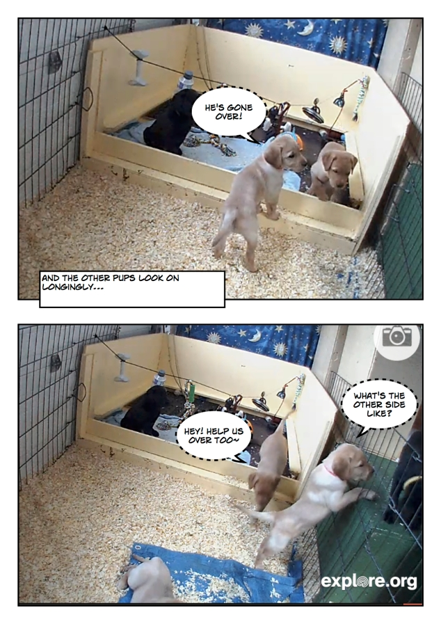 Puppyescape_page5