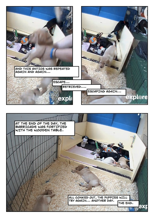 Puppyescape_page8